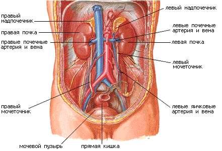 женские половые органы фото аккуратные
