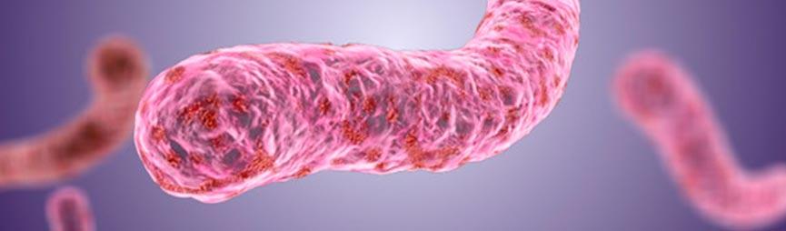 Найдены новые бактерии для лечения поверхностного рака мочевого пузыря