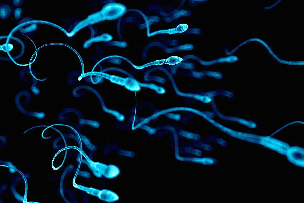 ДНК Спермы
