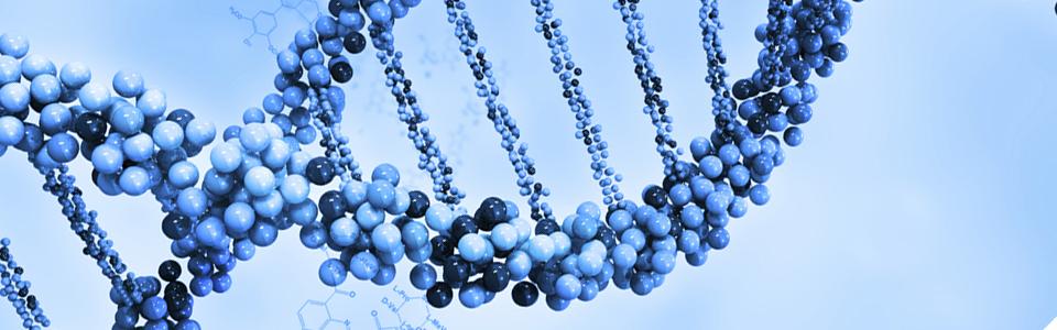 Эректильная дисфункция и гены