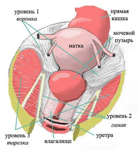 Как развить мышцы влагалища